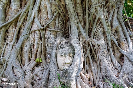 A stone Buddha head in the roots of a tree, taken at Ayutthaya, Thailand.