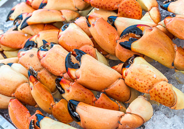 Stone Crab Tray Stone Crab Claws Ready to Eat claw stock pictures, royalty-free photos & images