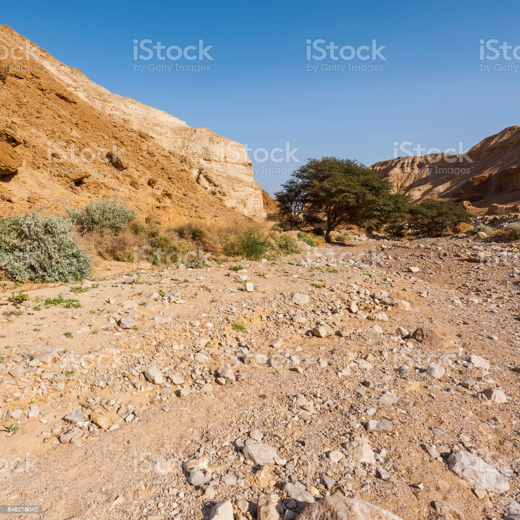 Stone desert in Israel stock photo