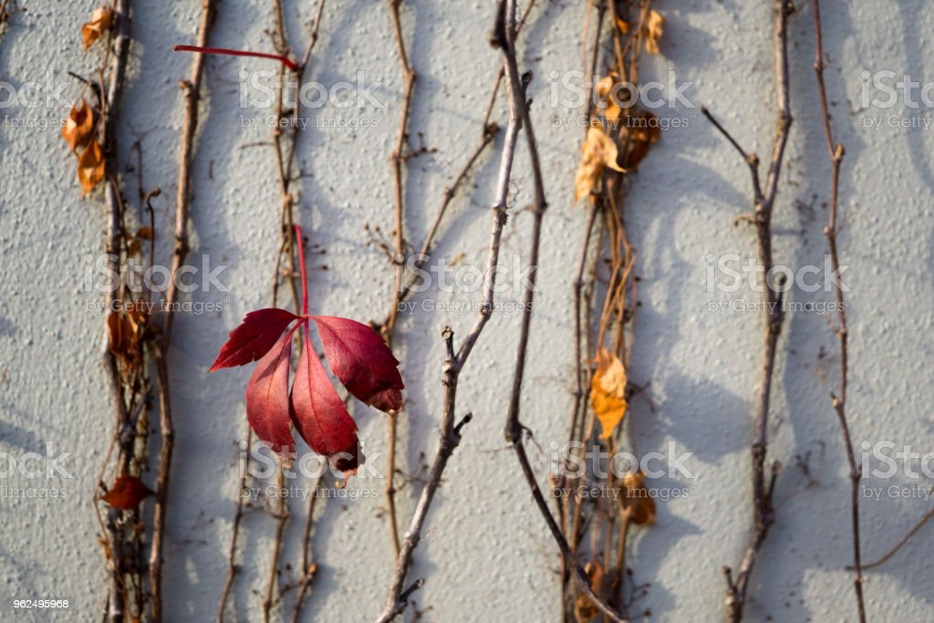 Stone face with out of focus red leave in front - Royalty-free Autumn Stock Photo