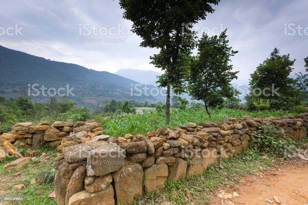 Stone fence and corn field of ethnic minorities, Viet Nam stock photo