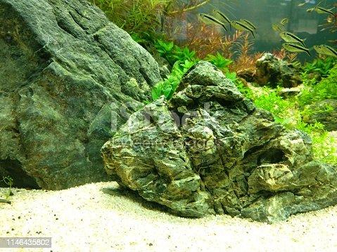 istock Stone & fish inside water 1146435802
