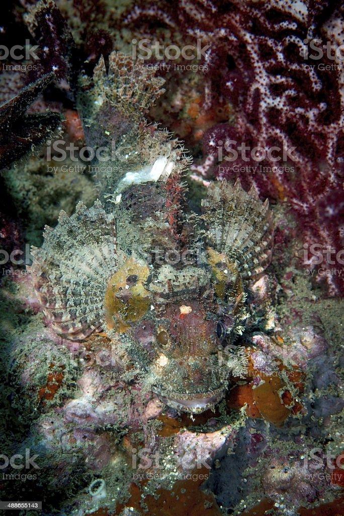 stone fish stock photo