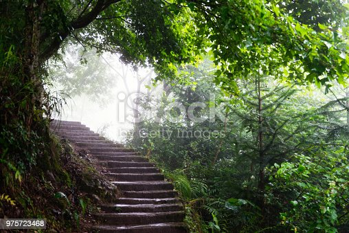 Stone footpath in the forest