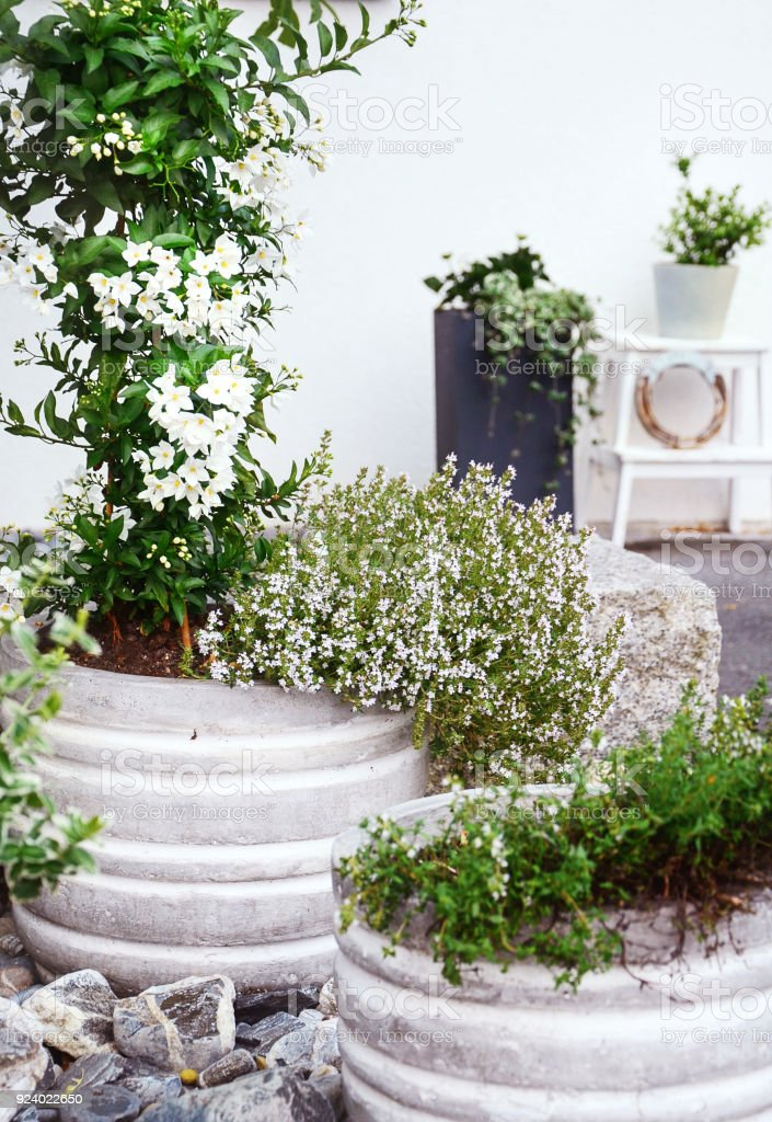 Stone Garden Arrangement At House Entrance With Green And White Plants And  Concrete Plant Pots.