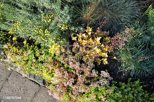 top view on a rock garden at the wayside with many different plants in the summer