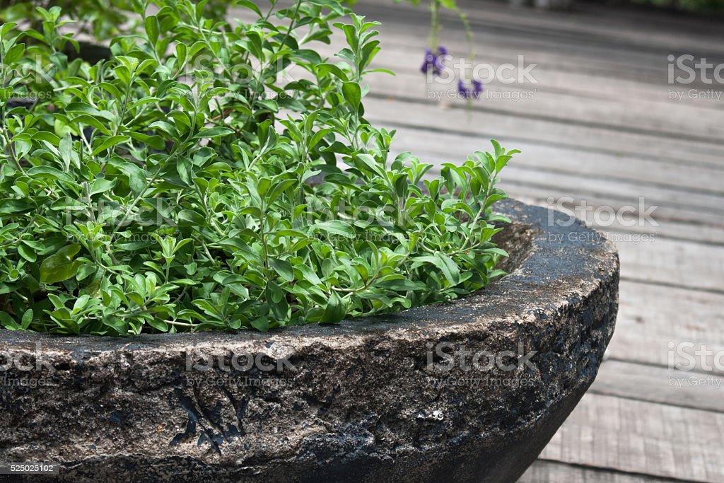 Stone garden pot stock photo