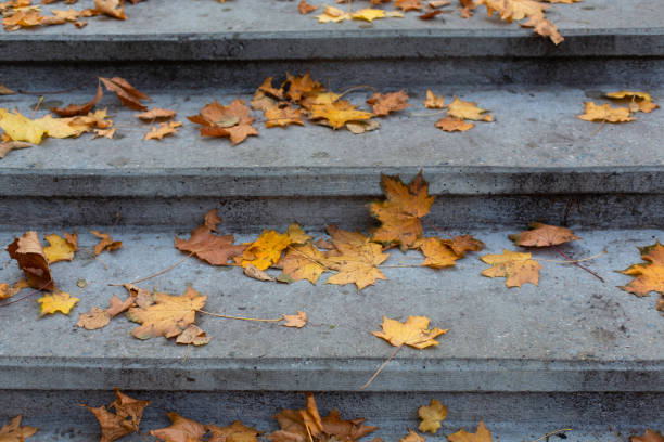 Stone grey steps in autumn park background stock photo