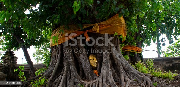 stone head of Buddha nestled in the of the bodhi tree's big roots in Thailand.