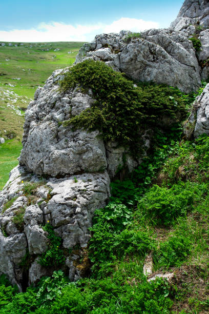 Stone in mountains covered with plants stock photo