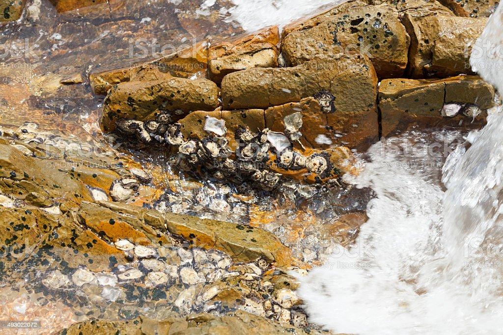 stone im Wasser – Foto
