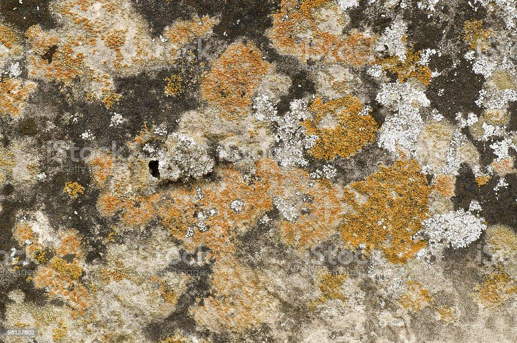 Stone moss royalty-free stock photo