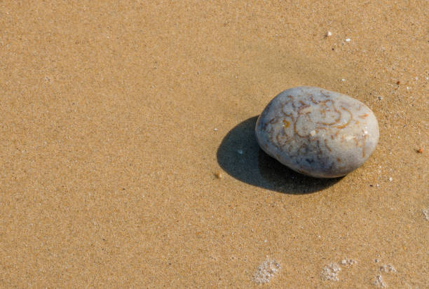 Stone on a Sand Beach - foto stock