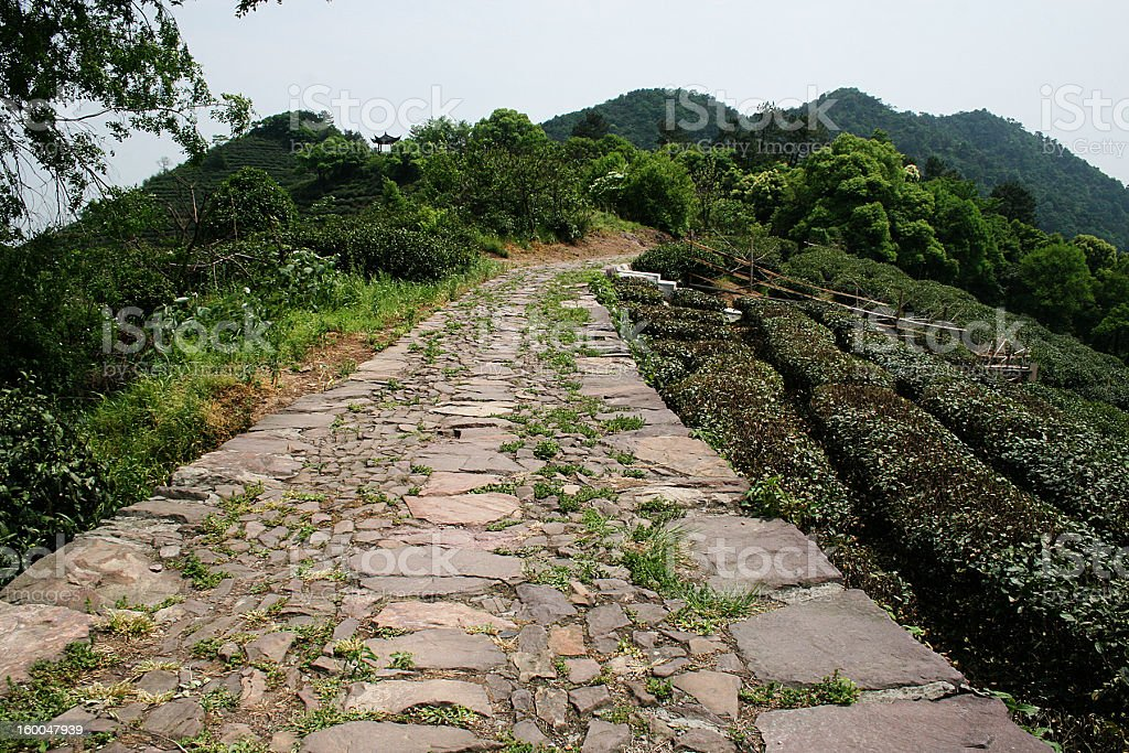 Stone Path Between Tea Fields royalty-free stock photo