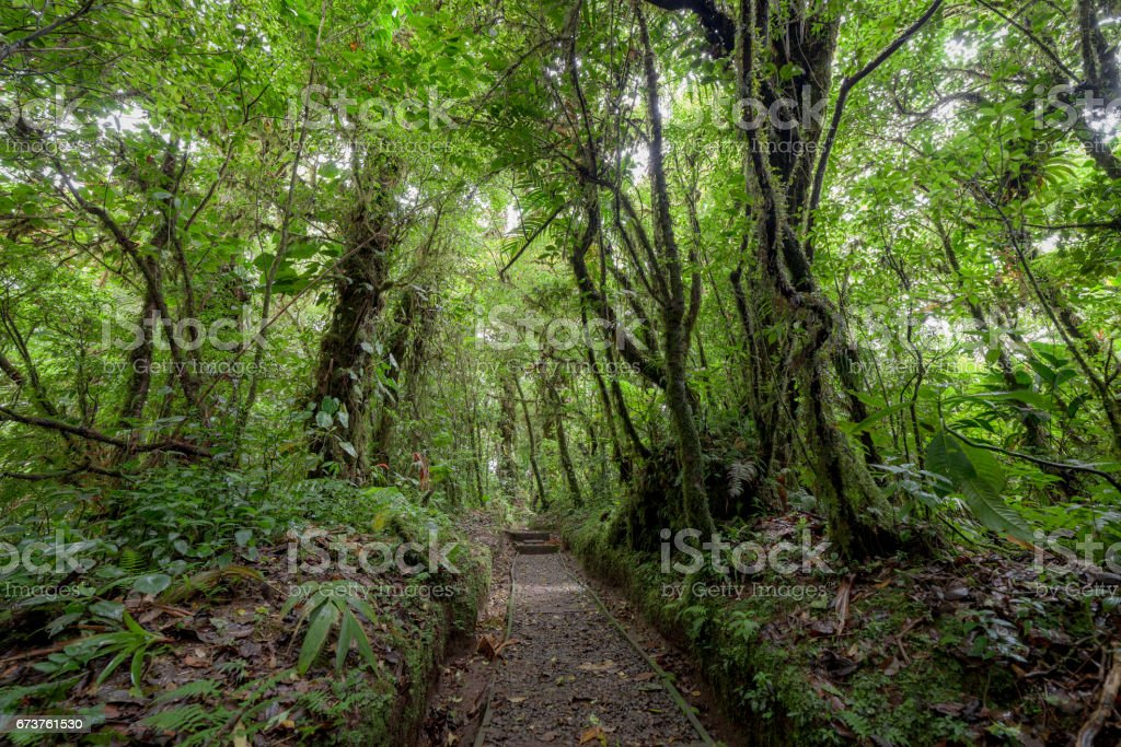 Stone path in rainforest Monteverde Costa Rica photo libre de droits