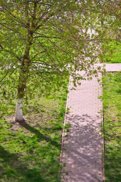 Cтоковое фото Stone path through park in spring