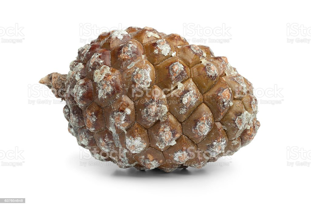Stone pine cone stock photo