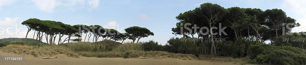 Stone Pines stock photo