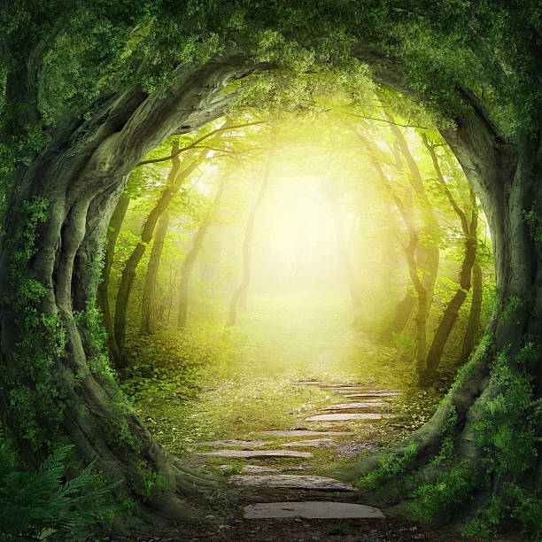 Stone road in magic forest leads to haze of light Road in magic dark forest dreamlike stock pictures, royalty-free photos & images