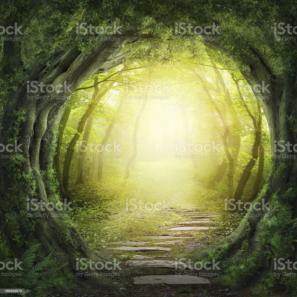Stone road im magischen Wald führt zu haze of light – Foto