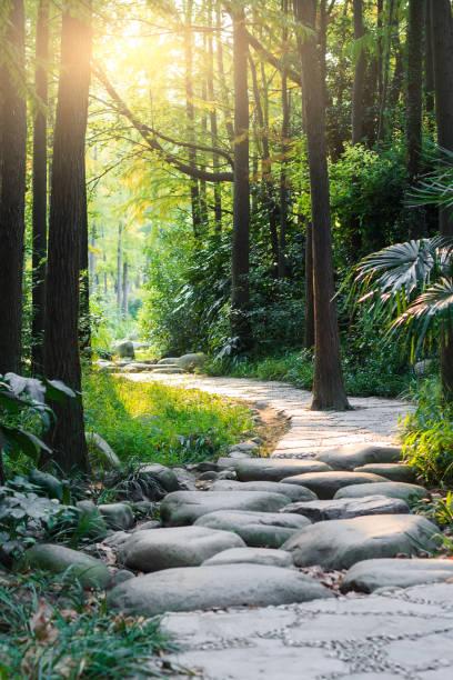 Stone road dans la forêt magique mène à Brume de lumière - Photo
