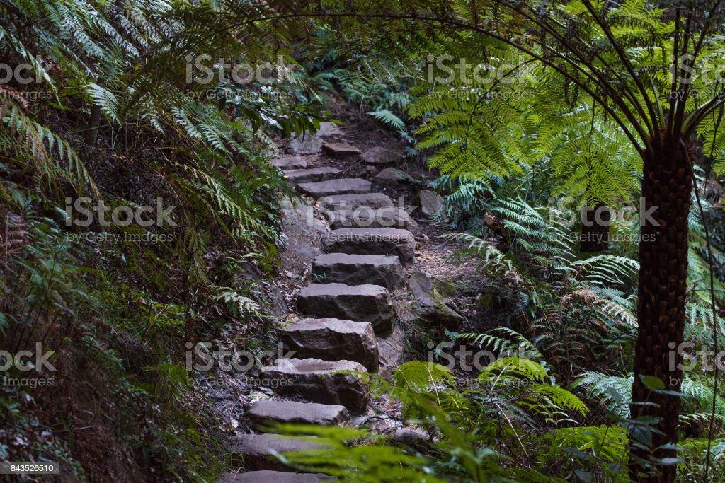 Stone staircase in rainforest. Blue Mountains, Australia stock photo