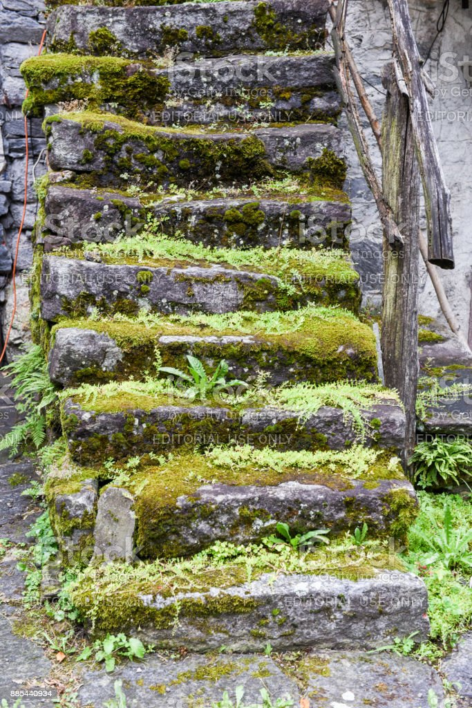 Stone stairs covered with moss stock photo
