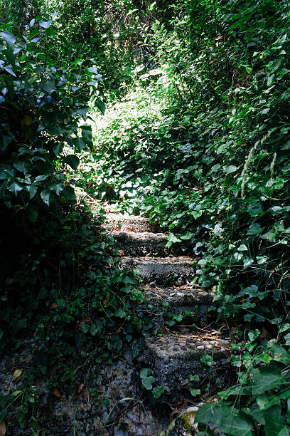 stone treppe im wald, tourismus-reiseziel - steine für gartenmauer stock-fotos und bilder