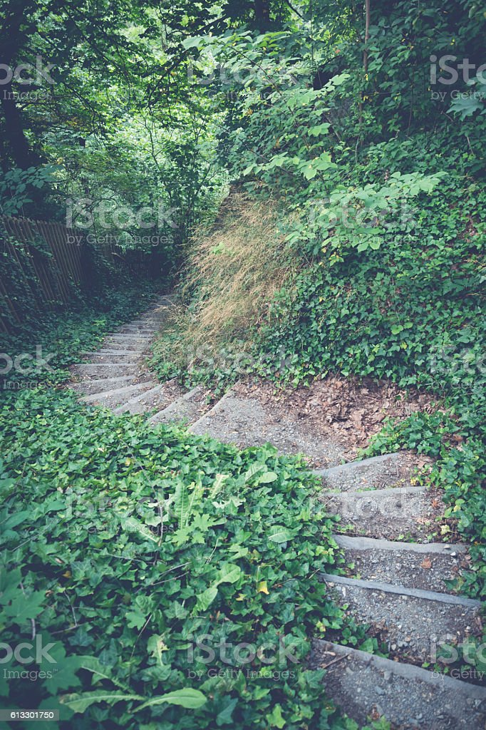 stone stairs in the wilderness stock photo
