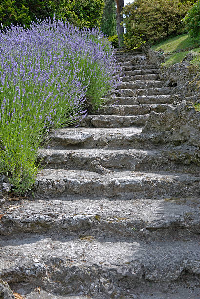 Stone stairs with lavender border. stock photo
