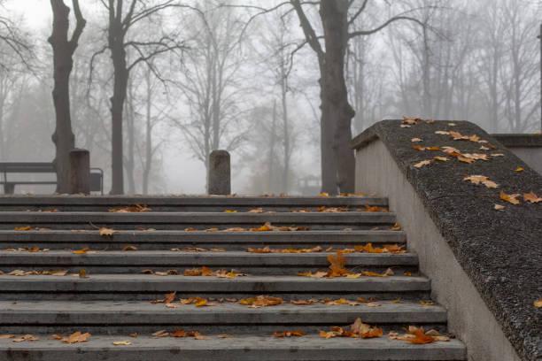 Stone steps in misty autumn park stock photo