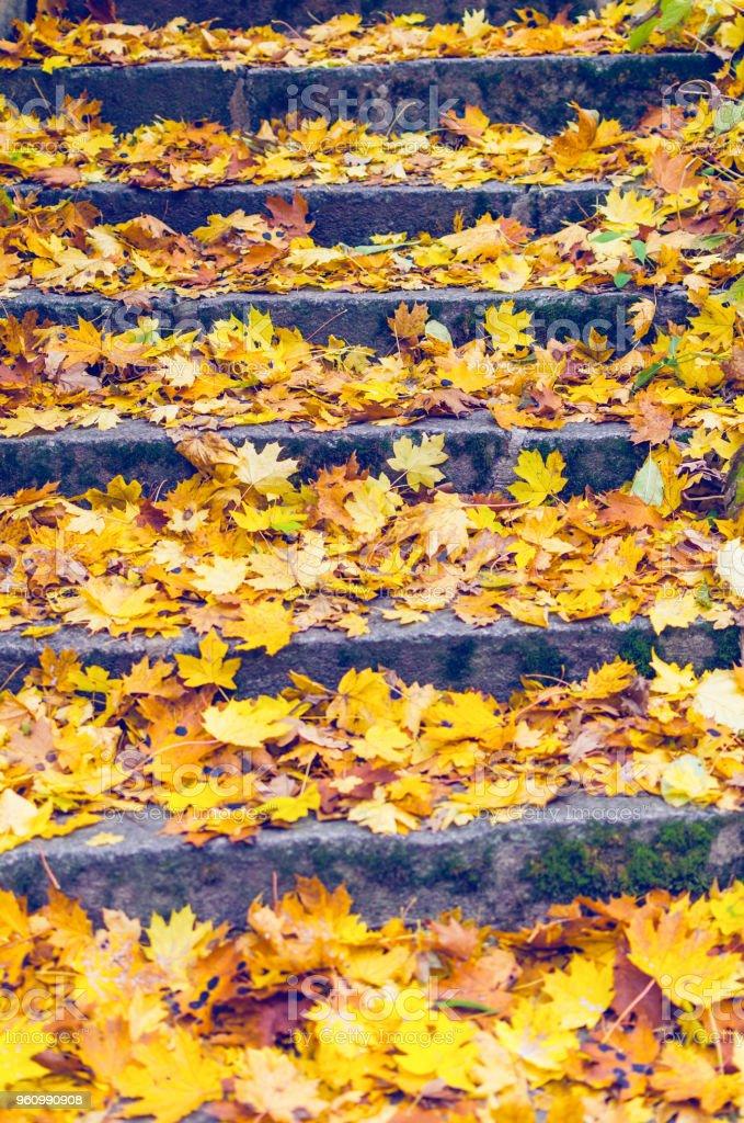 Steintreppen, übersät mit gelbem Herbstlaub - Lizenzfrei Alt Stock-Foto