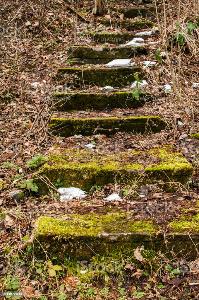 Stone steps with green moss stock photo