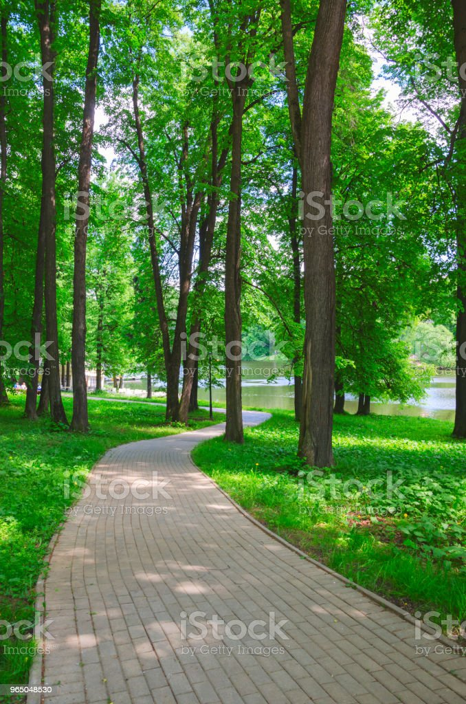 Stone tile road in empty shady park on a sunny summer morning.Fresh green grass and trees with lush foliage along the way. royalty-free stock photo