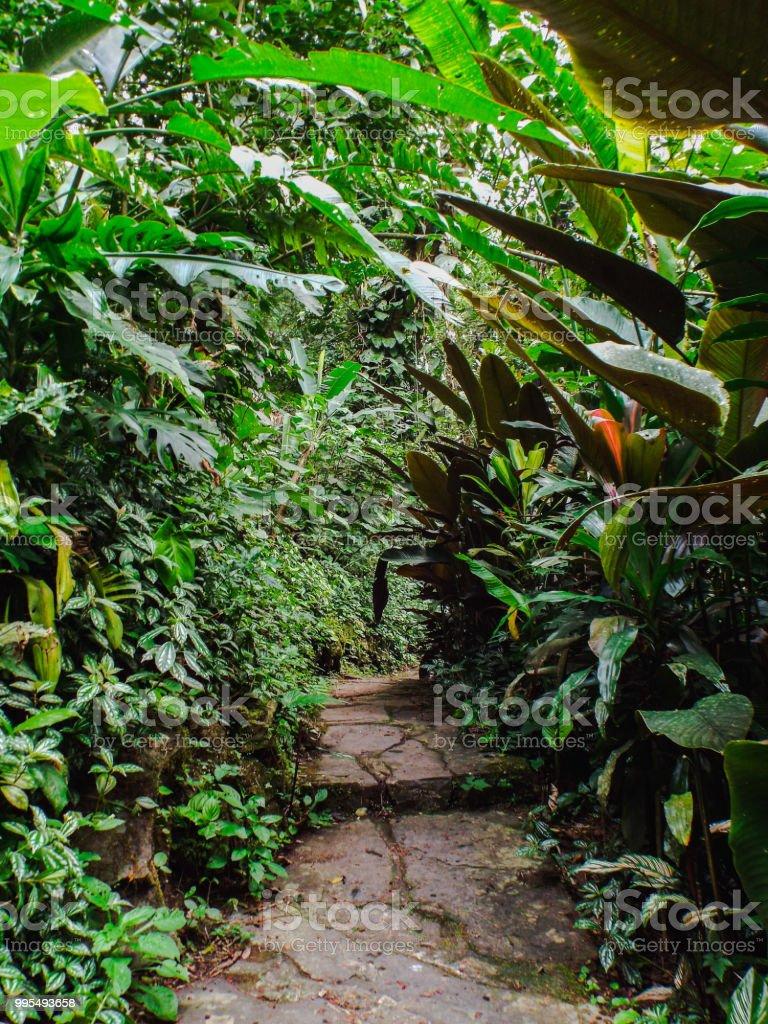 Stone Walkway In Lush Jungle Stock Photo - Download Image