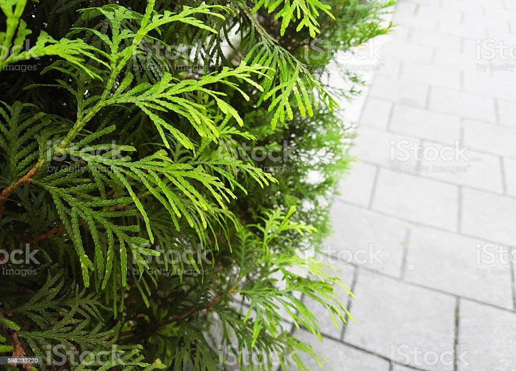 Parede de pedras e flora com grama no jardim foto royalty-free