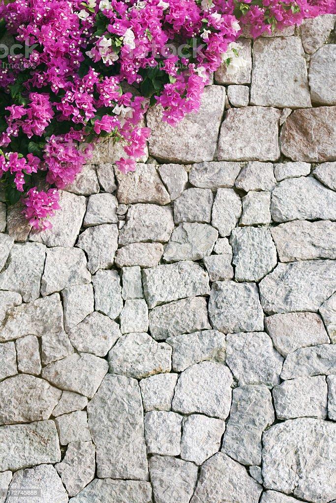 Mur De Pierres Et De Fleurs De Bougainvilliers En Fleur Rose Mexique