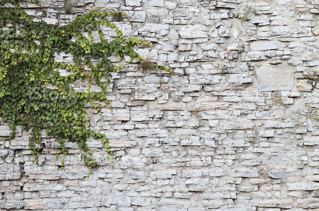 Stone Wall Background with ivey royalty-free stock photo