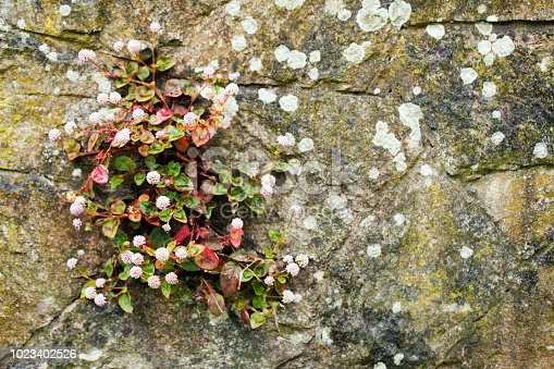Stone wall covered with lichen, bunch of uncultivated flowers. Copy space available on the right.