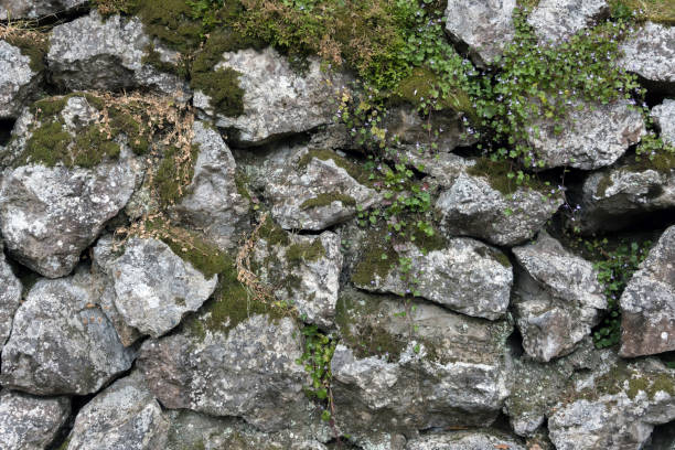 Stone wall with plant growth. stock photo