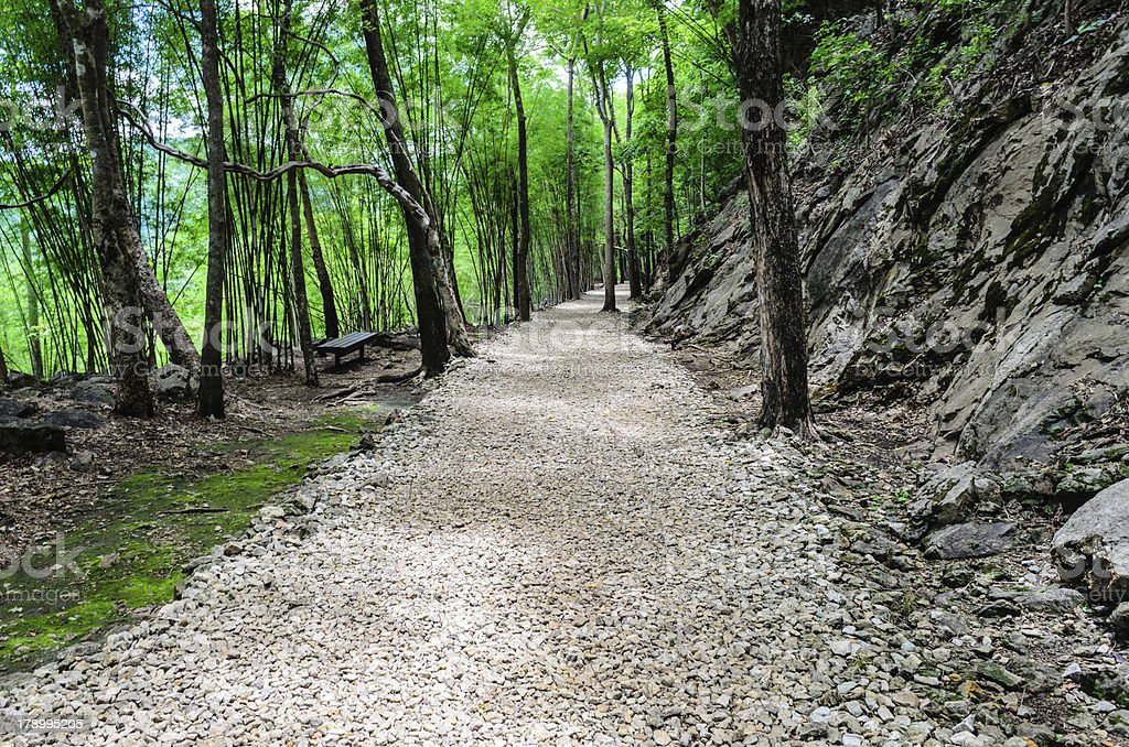 Stone Way in forest royalty-free stock photo