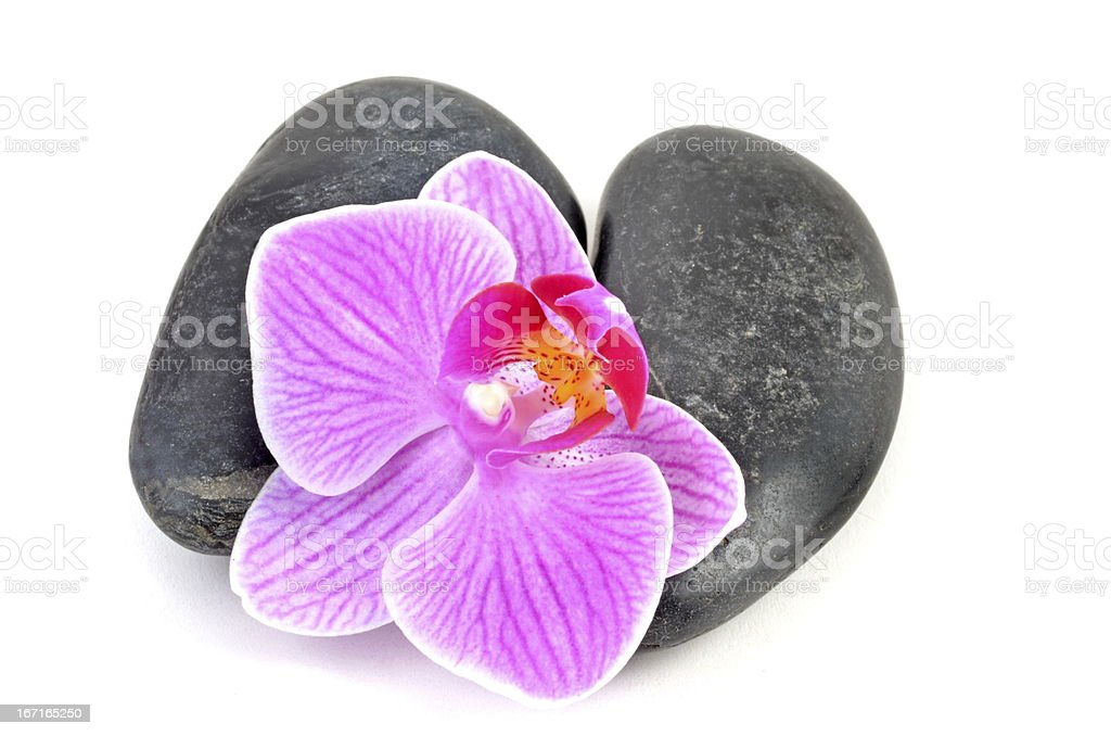 Stone with pink orchid. royalty-free stock photo