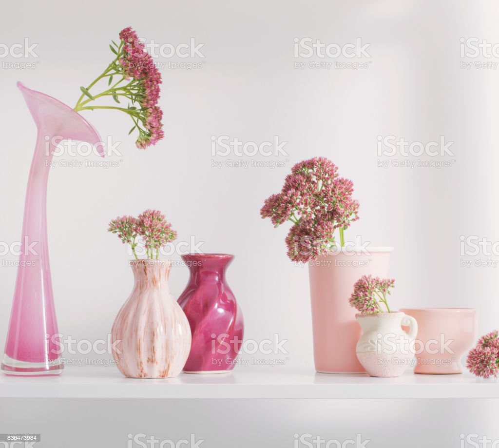 stonecrop in vase on white background stock photo