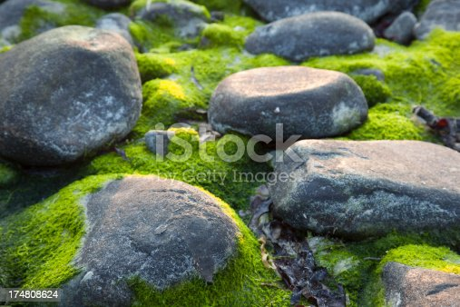 Stones covered with moss