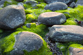 istock Stones by the sea 174808624