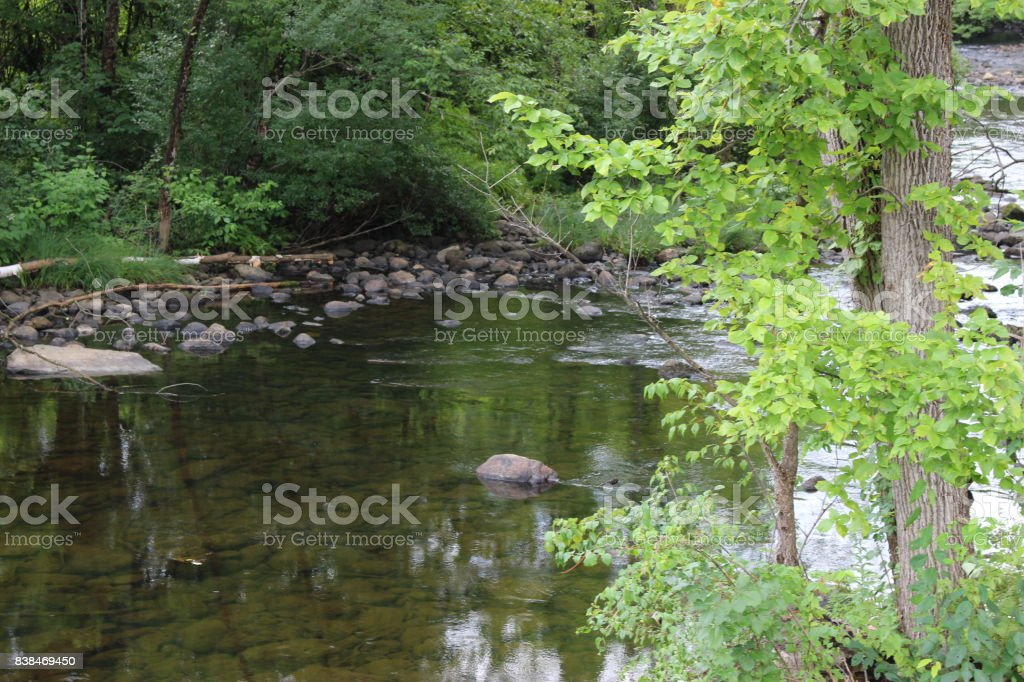 stones in a stream bordered with trees stock photo