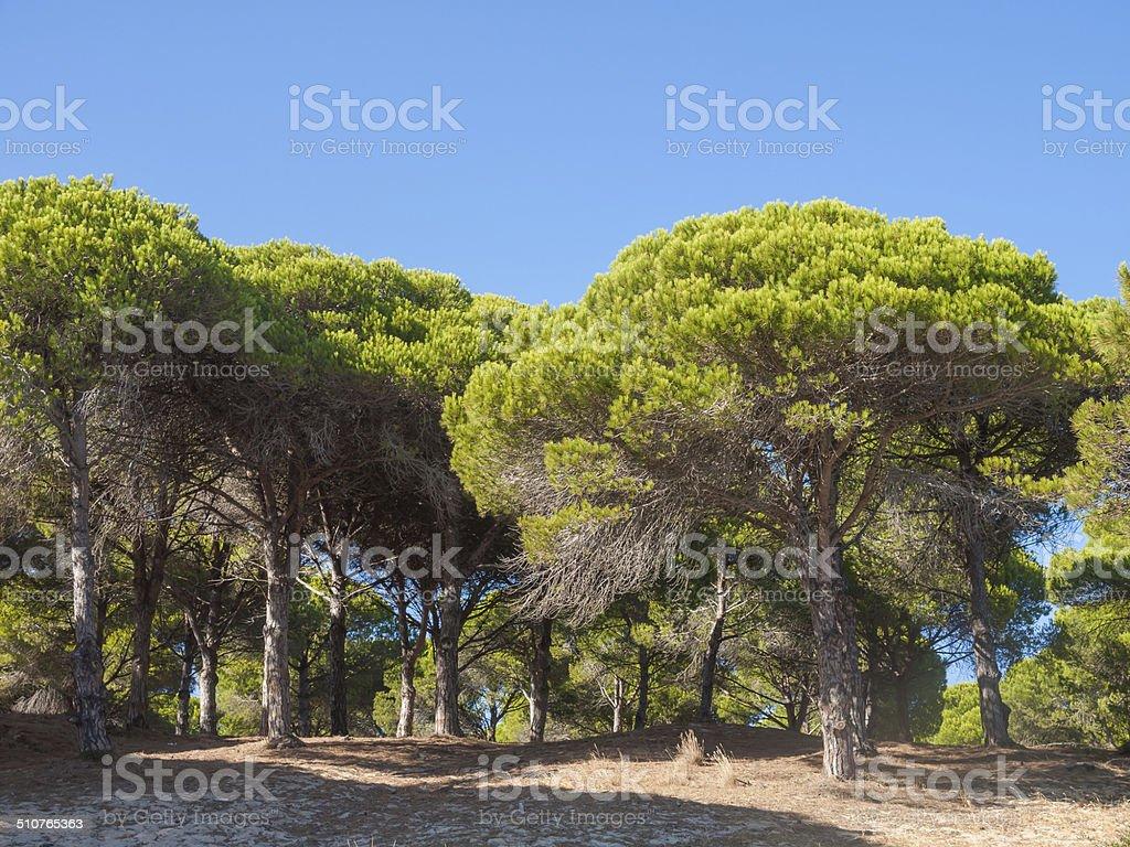 stones pines stock photo