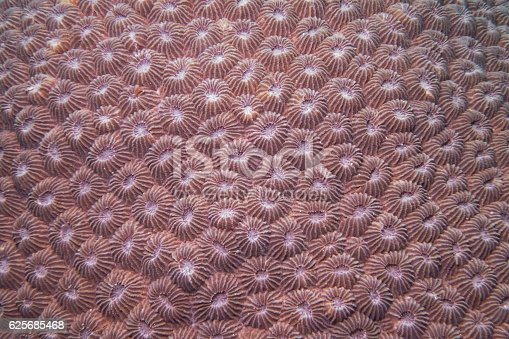 Underwater close up photography of a stony coral.