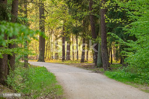 istock stony path leading through the forest, a place for active rest and recreation 1225977625