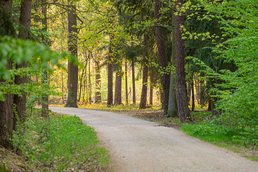 stony path leading through the forest, a place for active rest and recreation on sunny day